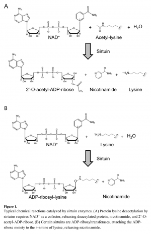 Sirtuin NAD Reactions