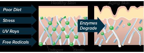 Skin Inflammatory Effects