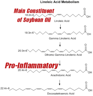 Soybean Oil Inflammation