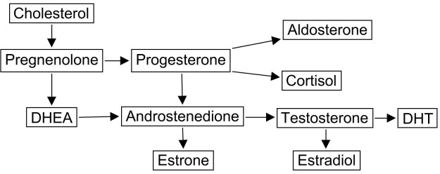 Steroid Hormone Pathways