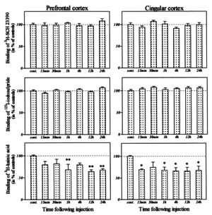 Sulbutiamine Dopamine Receptor Density