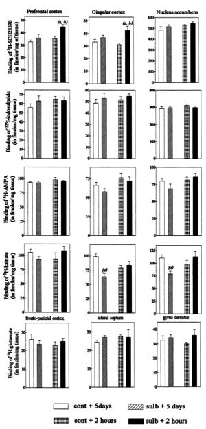 Sulbutiamine Glutaminergic Receptors