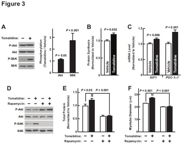 Tomatidine Study Figure 3