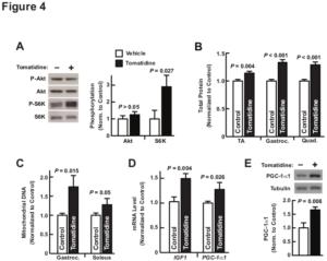 Tomatidine Study Figure 4