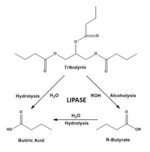 Tributyrin Transesterification