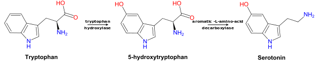 Tryptophan to 5-HTP to Serotonin