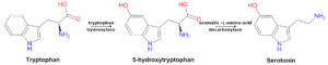 Tryptophan 5-HTP Serotonin Pathway