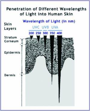 Ultraviolet Light Skin Penetration