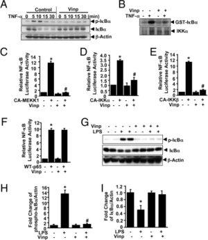 Vinpocetine Inhibits IKK