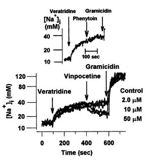Vinpocetine Sodium